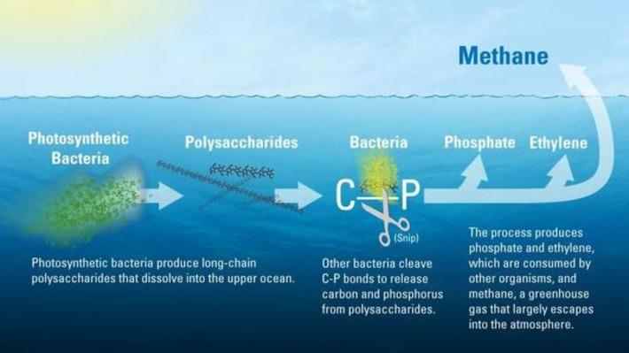 Gaz à Effet De Serre In Vie Marine Et Biodiversité Scoopit