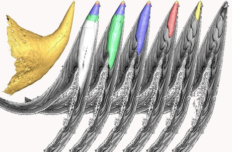 In Search For The Origin Of Our Teeth | Amazing Science | Scoop.it