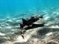 Moon could affect shark diving patterns | Seahorse Project | Scoop.it