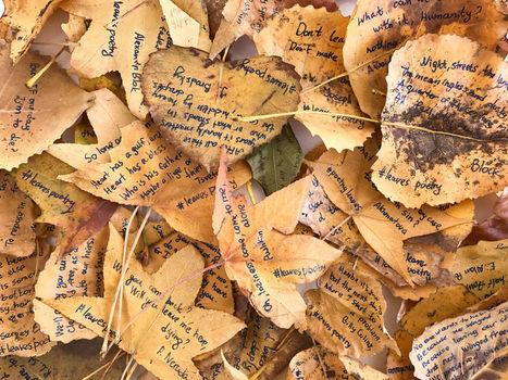 Elle écrit des poèmes sur 86 feuilles mortes, éparpillées dans New York | Poésie Elémentaire | Scoop.it