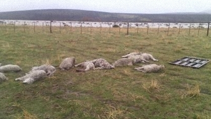Uruguay / Productores preocupados por mortandad de ovinos tras beber agua del río Negro | MOVUS | Scoop.it