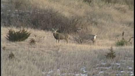 Change for next deer season in Iowa? - KTIV | scoop.it in education | Scoop.it