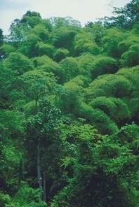 tropical rainforest biome description