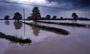 Washout year may have hit nutrition and taste of UK fruit and veg | The Barley Mow | Scoop.it