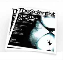 Widely Used Antibiotics Affect Mitochondria   The Scientist Magazine®   Longevity science   Scoop.it