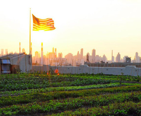 Rooftop Farming: the Next American Frontier | Sustainable agriculture | Scoop.it