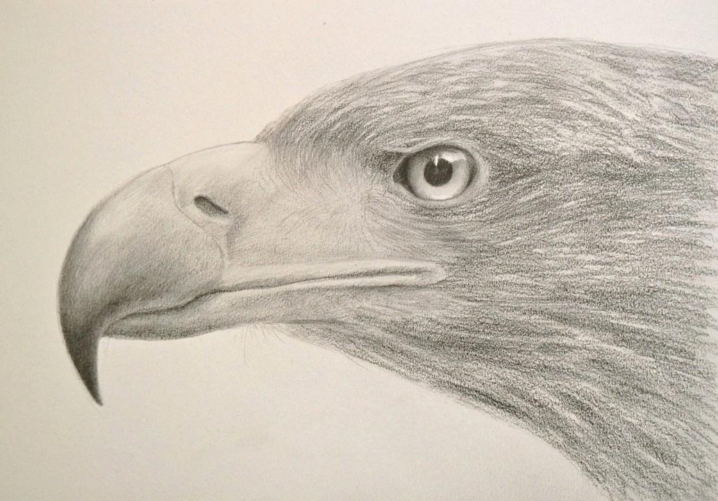 Cómo Dibujar Una Cabeza De águila