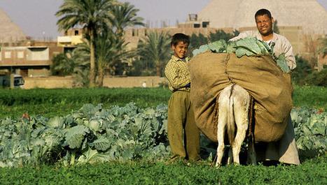 Producción sostenible de alimentos | Geografía | Scoop.it