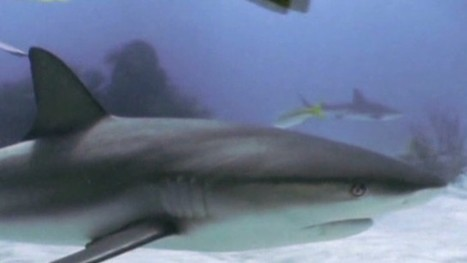 Discovery Channel defends dramatized shark special 'Megalodon' | The World Planet | Scoop.it