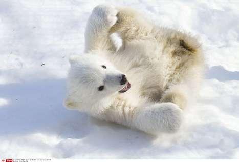 Vous cherchez un job? La Norvège recherche un guetteur d'ours ... | Voyages en terres polaires | Scoop.it