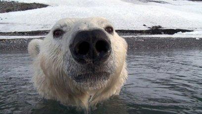 France 5 en replay | Caméra cachée, ours espionnés | Diffusé le 19-01-2013 à 17:04 | Voyages en terres polaires | Scoop.it