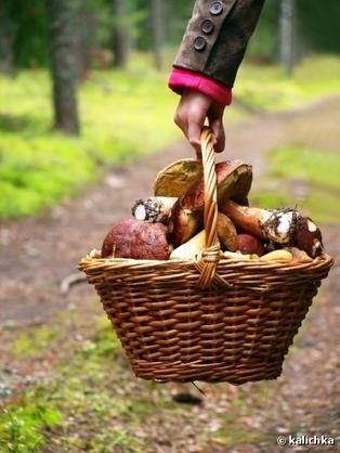 A savoir : Cueillette des champignons : conseils pour éviter l'intoxication | Mémo-notes de Melodie68 | Scoop.it