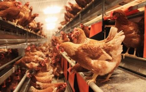 Drop in Use of Antibiotics in Danish Farming | The Barley Mow | Scoop.it