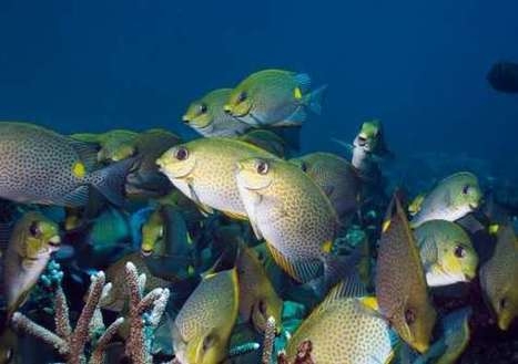 Invasive fish threat to kelp forests   Gaia Diary   Scoop.it