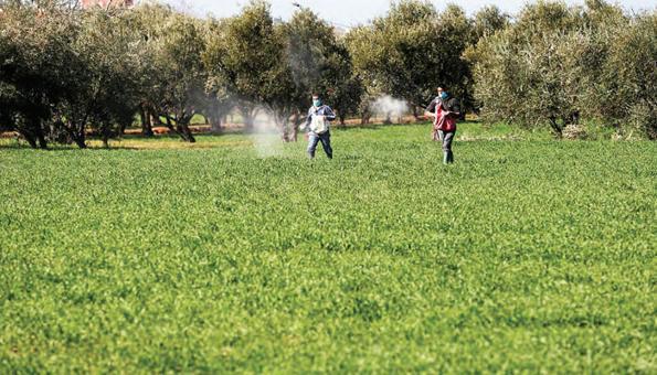 MAROC: L'agriculture nationale renoue avec les performances