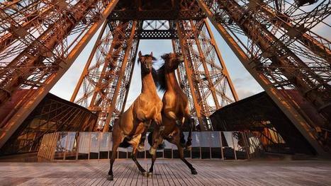 Des chevaux cabrés en haut de la tour Eiffel | Céka décore | Scoop.it