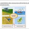 ressource alimentaire et biodiversité