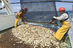 A peine un stock de poissons sur deux est pêché de façon durable - Journal de l'environnement