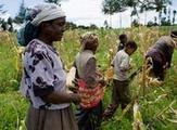 Kenyan farmers reap the benefits of technology | Climate Smart Agriculture | Scoop.it