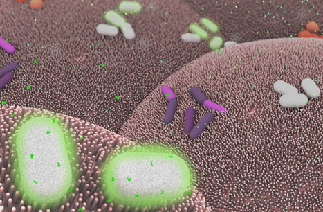 Could Bacteria Be Turned Into Living Medical Devices? | Qmed | shubush design & wellbeing | Scoop.it