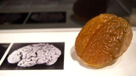 """El cerebro de Einstein poseía unas """"características únicas"""" según un estudio   About Biochemistry   Scoop.it"""