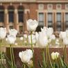 Oklahoma State University Education