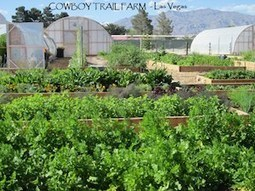 Small Scale Farm Op Only Miles from Las Vegas Strip Shows Promise of Desert Agriculture   Market Growing   Scoop.it