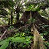 Antarctica's tropical past is revealed | forest gardening | Scoop.it