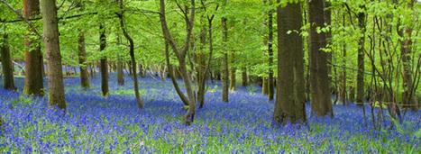 L'agriculture et la forêt, des contributeurs possibles à la lutte contre le changement climatique | AGRONOMIE VEGETAL | Scoop.it