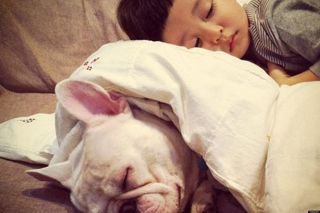 LOOK: Little Boy And His Bulldog Are The Only Valentines You Need | Xposed | Scoop.it