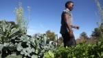 School gardens score in Iowa City district | Floriade 2022 | Scoop.it