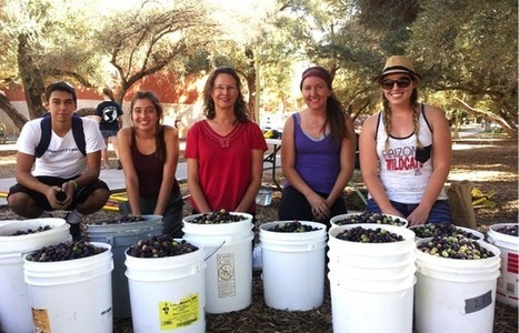 Saving Food From the Dumpster: The UA's Edible Campus | UANews | CALS in the News | Scoop.it