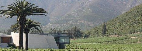 La Carmenère, clé de voûte des vins rouges du Chili | Oeno-digital | Scoop.it