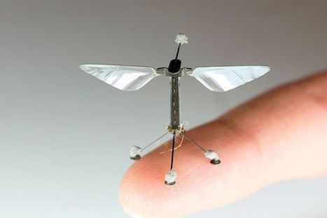 New flying robots inspired by creatures of the skies   Heron   Scoop.it