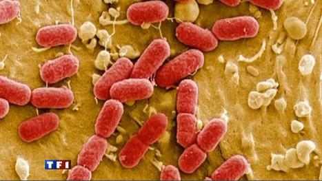 Allemagne : Bactérie Eceh : la piste du concombre espagnol s'éloigne - Sciences   TF1 News   Toxique, soyons vigilant !   Scoop.it
