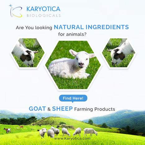 veterinary suppliers | Animal health food manuf