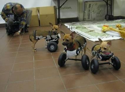 Wheelie Doggone Cute | Strange days indeed... | Scoop.it