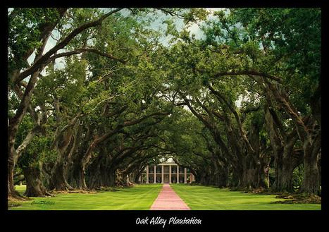 Stunning Oak Alley Plantation | Oak Alley Plantation: Things to see! | Scoop.it