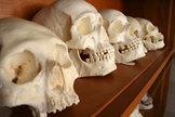 EUROPE : Battered Skulls Reveal Violence Among Stone Age Women | World Neolithic | Scoop.it