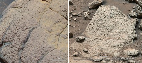 """Mars Could Have Supported Life, NASA Says 