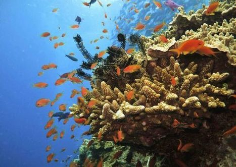 Conservation Society send a strong message to Minister | Blue Planet | Scoop.it