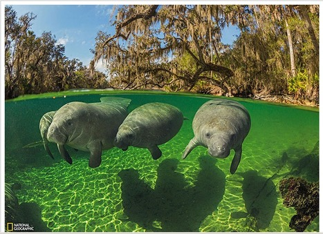 Las mejores fotos de National Geographic julio 2013   Agua   Scoop.it