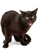 Il ne faut pas juger un chat sur sa couleur | Histoire de chats | Scoop.it