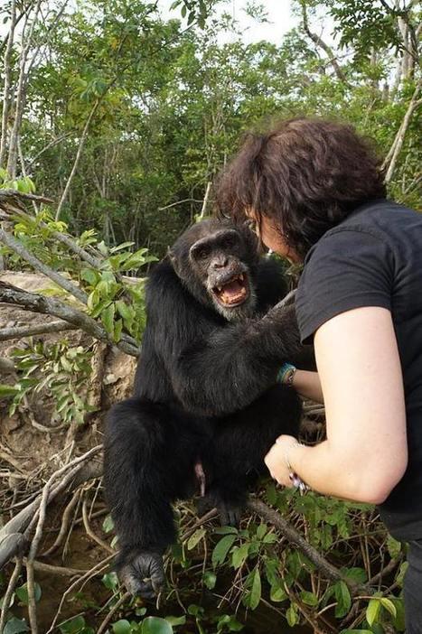 'World's loneliest chimp' hugs conservation worker after spending years in isolation | Antarctica | Scoop.it