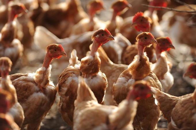 Au Portugal, le prix de la viande monte en flèche à cause de la pandémie