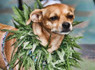 Marijuana Consumption Increases Among Animals As Availability Of The Drug Grows | Xposed | Scoop.it