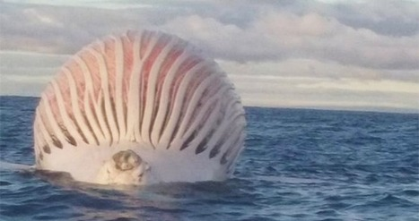 This Strange Sphere Just Surfaced Off The Coast Of Australia... And It's Seriously Disturbing. | Vloasis sci-tech | Scoop.it