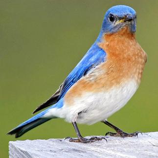 Top 10 Birds for Your Garden: Organic Gardening | Organic Gardening, Farming, Lawncare, Landscaping & Eating :) | Scoop.it