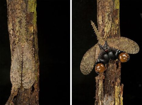 Photos: Masters of Disguise—Amazing Insect Camouflage | Science, Technology & Education | Scoop.it