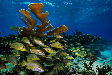 Cuba's Underwater Jewels Are in Tourism's Path   Gaia Diary   Scoop.it